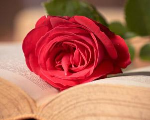 Польза чтения, раскрытая книга роза Миниатюра