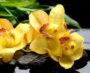 Способы самомотивации, желтая орхидея Миниатюра