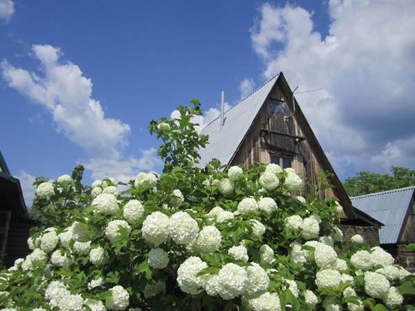 Фотографии лета Цветущий куст