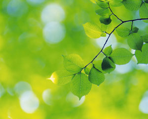 Все еще будет Зеленая ветка