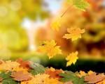Желтые осенние листья Творчество - наша слабость и сила Миниатюра
