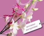 шестой выпуск журнала Ароматы счастья
