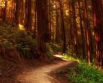 Дорога в лесу. Планирование жизни Миниатюра