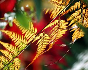 Счастье в осени, осенние листья Миниатюра