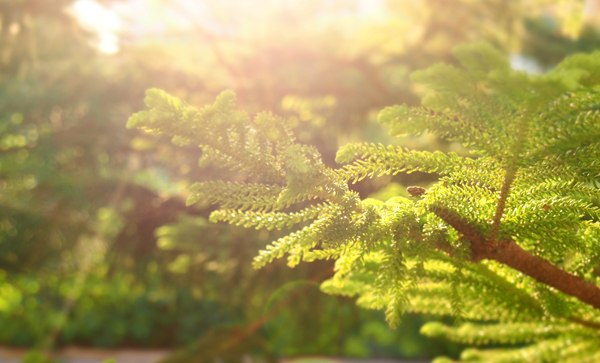 Зеленые растения, солнце