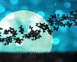 Управление жизнью, ночь, луна, бабочки