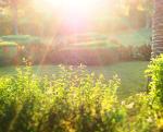 Отдых для души Зелень солнце