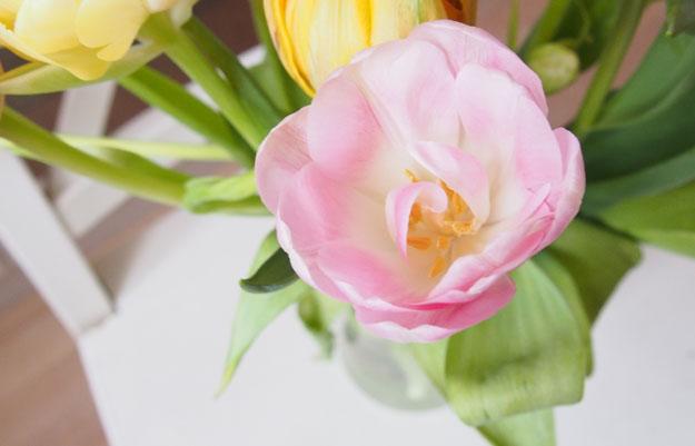 Самомотивация Тюльпан