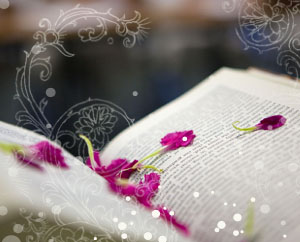 Раскрытая книга, лепестки, Поисковые запросы