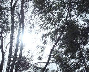 О прощении Ветер деревья