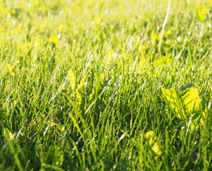 Как изменить жизнь, зеленая трава солнце