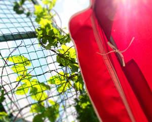 Лето, солнце, зелень. Как быть счастливым