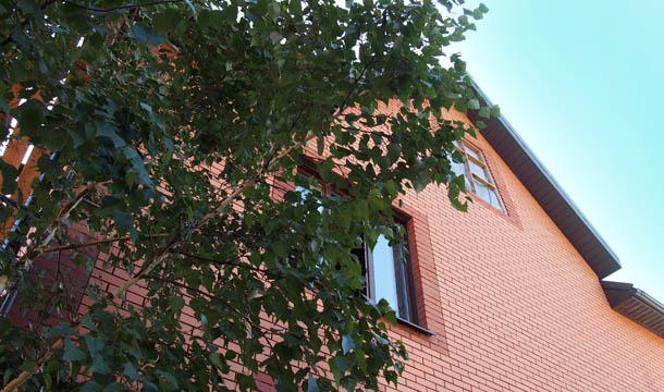 Любимая работа Дерево рядом с домом