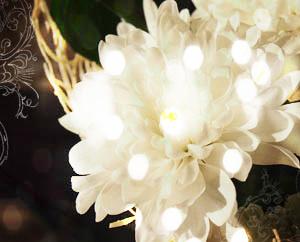 Белые хризантемы, Посвящается маме