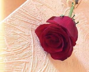Жизнь семейная Красная роза