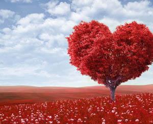 Дерево сердце любовь Фильмы про любовь