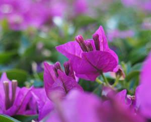 Разобраться в себе Цветы