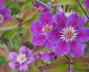 Сиреневые садовые цветы Как сохранить чувство близости