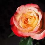 Современные стихи о любви
