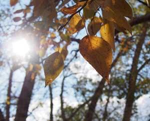 Желтые осенние листья, солнце, Как пережить разочарование