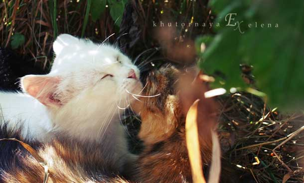 Как создать счастливые отношения Кошка белая и цветная