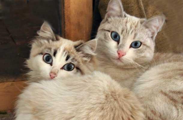 Как создать счастливые отношения Две белые кошки