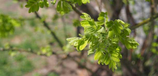 Так не должно быть Зеленые весенние листочки