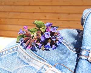 Позитивное мышление Медунки цветы