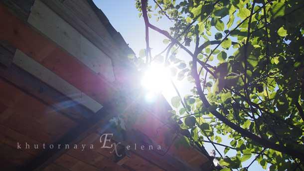 Отдых на природе летом Яблоня над крышей