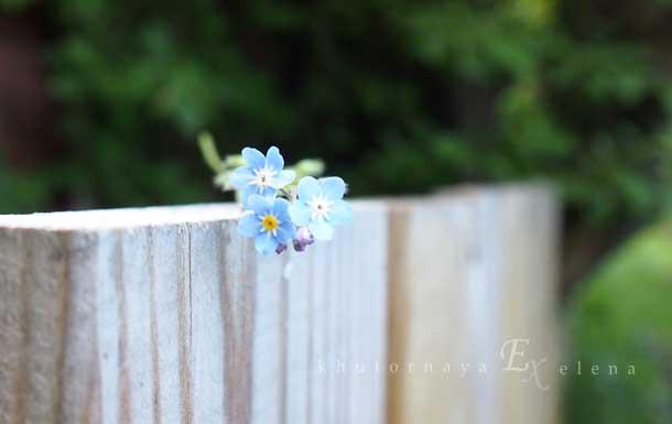 Отдых на природе летом Цветок на заборе