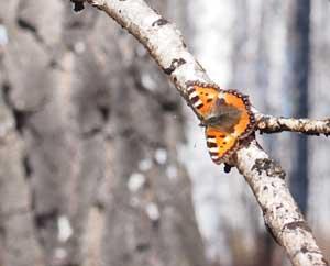 Короткометражный фильм про любовь Бабочка весной