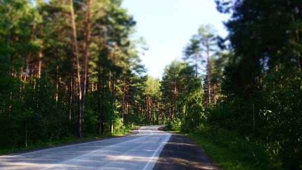 Чем заняться в машине в дороге Дорога в лесу
