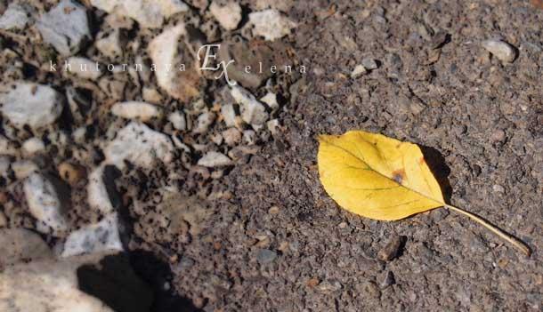 Как приходит старость Осень