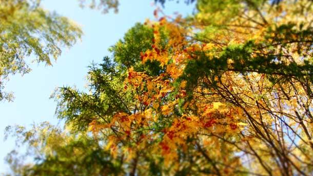 Как стать мудрее Осенние деревья на фоне неба