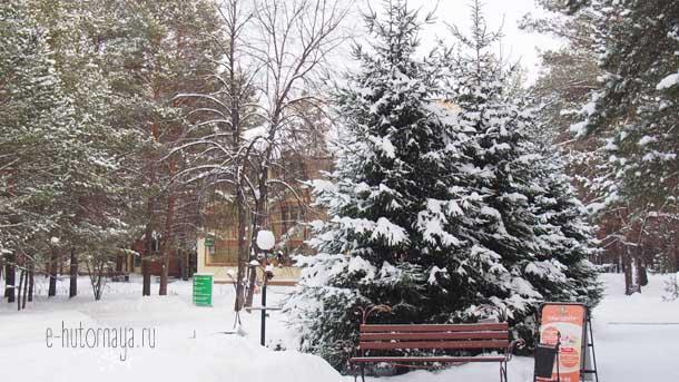 Отель Борвиха Бердск Ели на территории