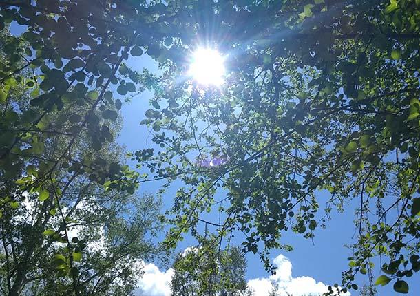 Предчувствие как способ все изменить Солнце сквозь листву