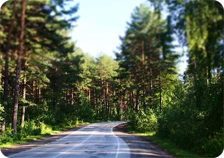 Расклад метафорических карт Карта с лесом и дорогой