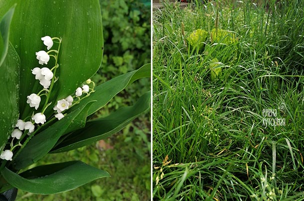 Красота в мелочах Ландыши, трава