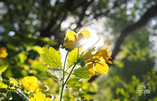 Красота в мелочах Желтые цветы на солнце